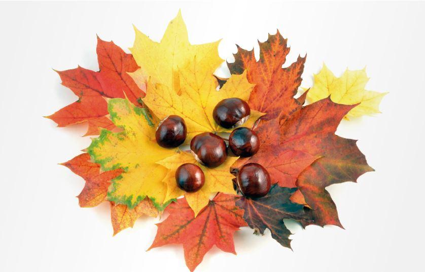 Einladung zum kostenlosen Herbstseminar 2018